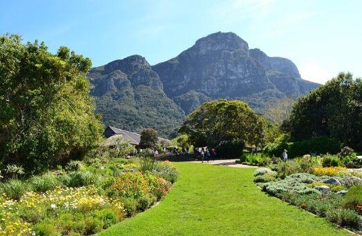 jardin kirtenbosch afrique