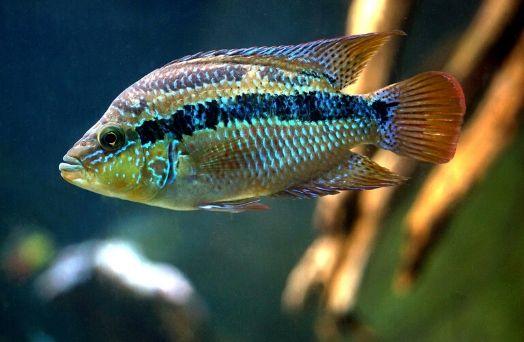 poisson zoo staten island