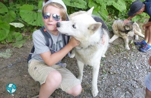 colonie chiens husky france