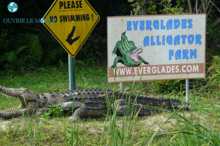 Everglades à Miami-Colo CEI Miami