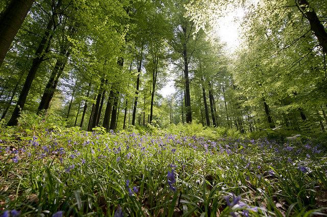 Les incontournables de Bruxelles-Forêt de Soignes