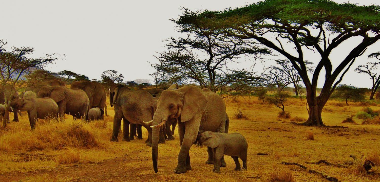Séjour en Tanzanie - CEI WTS Ecotourisme & Volontariat