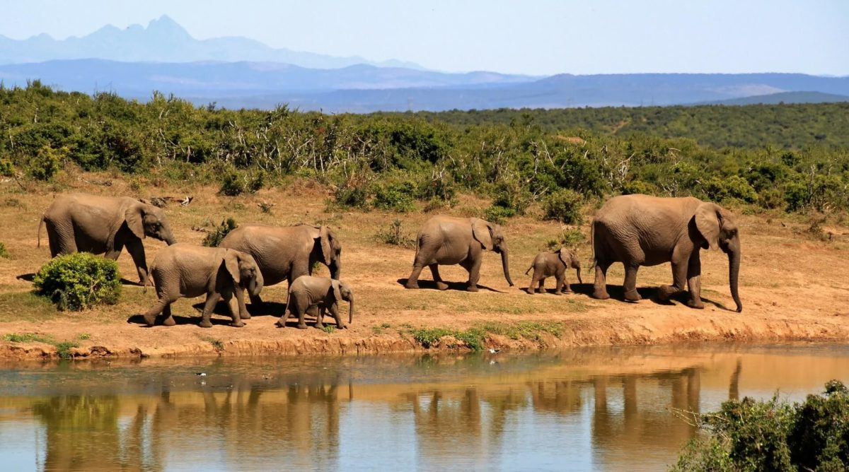 groupe-éléphants