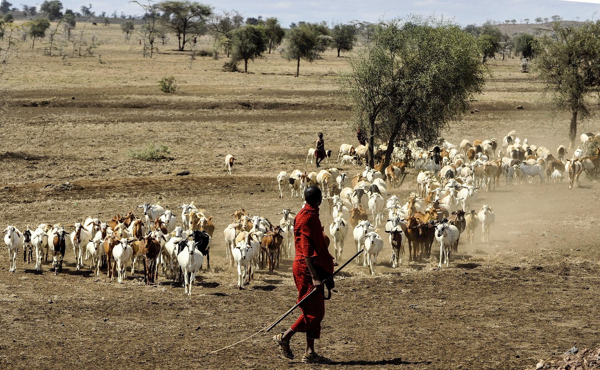 Séjour en Tanzanie-Un berger Maasaï