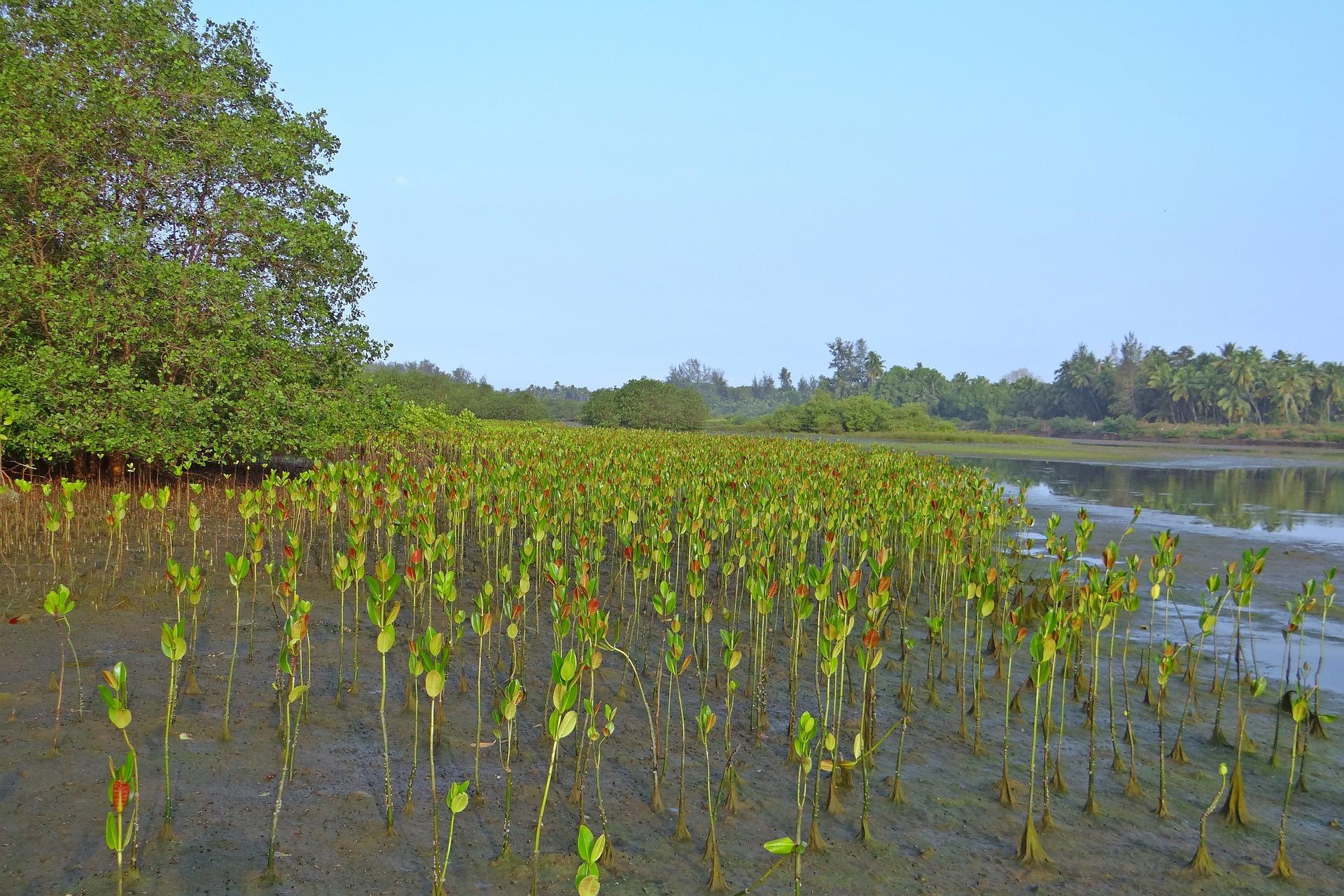 Séjour aux Philippines-Plages et mangroves