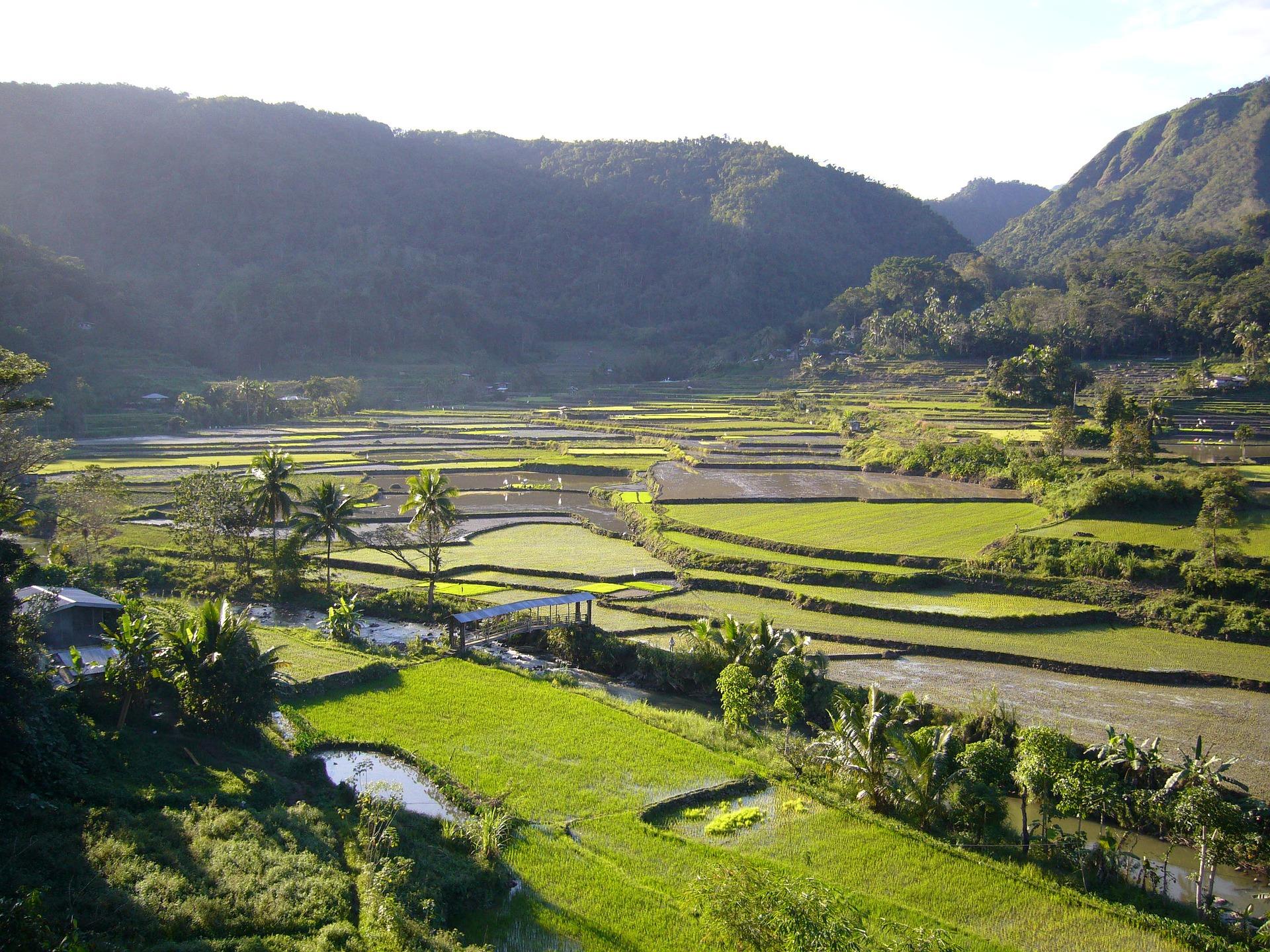 Séjour aux Philippines-Rizières à Luzon aux Philippines