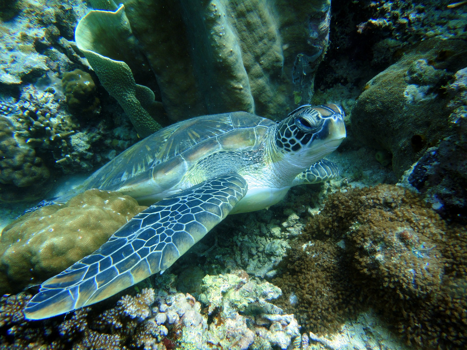 Séjour aux Philippines-Tortue marine